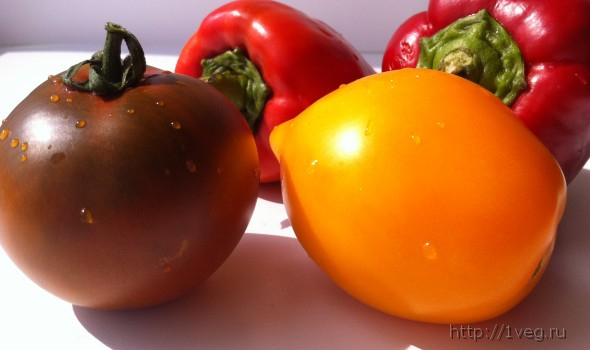 Теплый овощной суп без варки - рецепты, полезные блюда