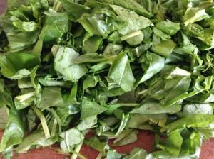 Шпинат и другая зелень для салата